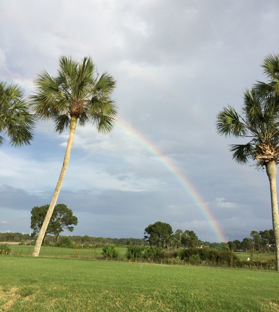Rainbow with palm trees